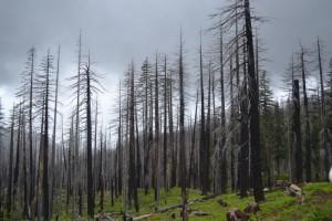 Oregon ist abgebrannt