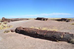 200 Millionen Jahre alter Baum