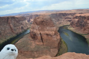 Robbi bei Horseshoe Bend