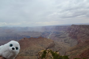 Robbi am Grand Canyon
