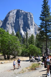 Photo-Point in Yosemite Valley