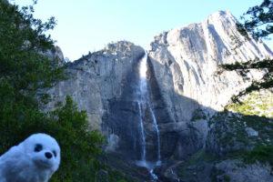 Robbi bei den Lower Falls