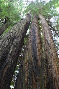 Viele große Bäume